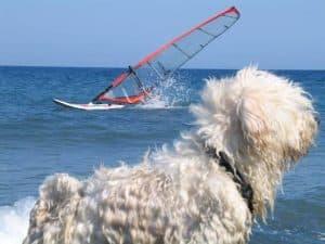 Nemely-Windsurf-7